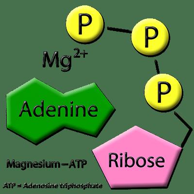 Magnesium ATP