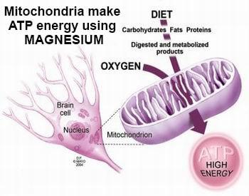 Mitochondrai and Magnesium ATP