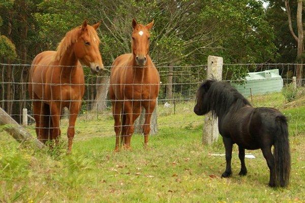 magnesium_horses