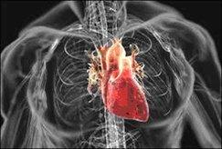 cardiovascular disease - heart health