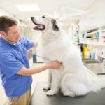 agnmesium-deficiency-in-dogs